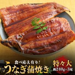 3尾でお得 うなぎ 蒲焼き 特々大3尾 食べ応え有り(約240g×3尾 タレ山椒付き)ウナギ 鰻 土用の丑