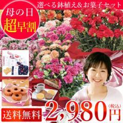 【母の日特集】【鉢植え】 【送料無料】色が選べるカーネーションの鉢植えと選べるお菓子セット