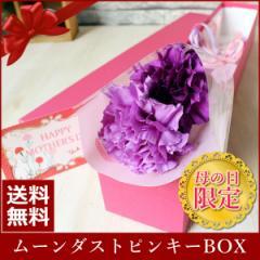 母の日 ギフト 遅れてごめんね ムーンダスト ピンキーBOX 二輪 紫 カーネーション 送料無料 母の日 プレゼント 母の日 花