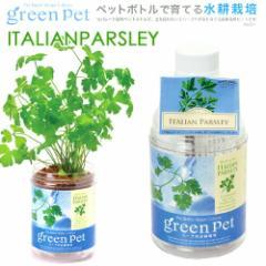 育てるグリーンペット ハーブ イタリアンパセリ 家庭菜園 キッチン菜園 室内園芸