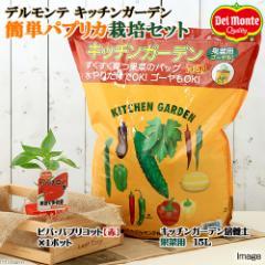 (観葉植物)私の菜園 デルモンテ キッチンガーデン 簡単パプリカ栽培セット(ビバ・パプリコット 赤) 家庭菜園