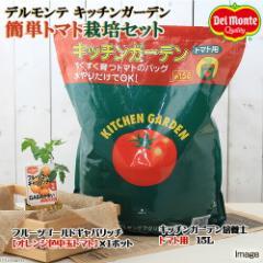 (観葉植物)私の菜園 デルモンテ キッチンガーデン 簡単トマト栽培セット(フルーツゴールドギャバリッチ) 家庭菜園