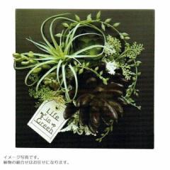 人工観葉植物 アーティフィシャルグリーンアレンジ クリアケース入り □18cm  N10-1229 インテリア 造花