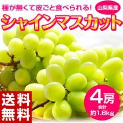 ぶどう ブドウ 葡萄 送料無料 山梨 シャインマスカット 4房 (合計 約1.6キロ) ※常温または冷蔵