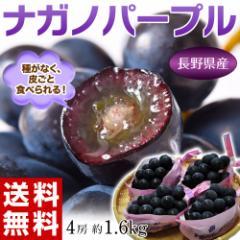 ぶどう 葡萄 送料無料 長野県産 ナガノパープル 4房(合計 約1.6kg) 常温又は冷蔵