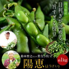 枝豆 えだまめ 埼玉 鈴木智之さんの葉つき枝豆「陽恵(ようけい)」 約350g×3袋 ※さやの重量で合計約1kgになるようにお詰めします。