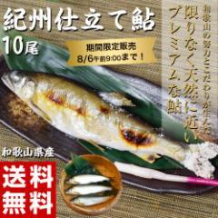 送料無料 和歌山県産 紀州仕立て鮎 10尾 プレミア和歌山認定 うめぇ鮎 冷蔵