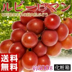 ぶどう 送料無料 石川県産 超大粒ぶどう「ルビーロマン」 約500g 化粧箱 葡萄(ブドウ) 冷蔵 のしOK