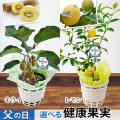 父の日 ギフト 選べる2種類の果樹5号鉢 キウイ か レモン(実付き)の鉢植え〜バスケット付き!