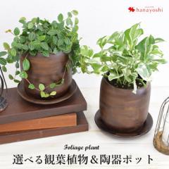 グリーンネックレスかハートカズラかポストかペペロミアの陶器ポット 受け皿付き 観葉植物 インテリア ミニ 鉢 ギフト 引越し祝い