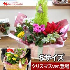 季節のおまかせ花鉢とグリーンの寄せ入れSサイズ【フラワーバスケット クリスマス 誕生日 プレゼント 母 女性 祖母 花 お祝い 贈り物】