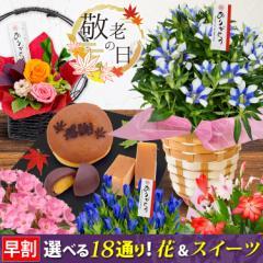 敬老の日 花 選べる18撰 りんどう 白寿 におい桜 など花 5種&和菓子福袋 カステラ、海老せんべいなど3種から選べるお花とスイーツセット