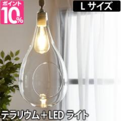 ペンダントライト ボタニックハンギングライト Lサイズ テラリウム植物 照明 日本製 LED ディスプレイ Another Garden アナザーガーデン