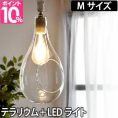 ペンダントライト ボタニックハンギングライト Mサイズ テラリウム植物 照明 日本製 LED ディスプレイ Another Garden アナザーガーデン