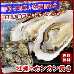 牡蠣のカンカン焼き 殻付きマガキ たっぷり 1.5kg かき カキ BBQ バーベキュー のし対応可能 送料無料 キャッシュレス5%対象店 備蓄 父の