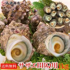 活きたまま発送 サザエ 1kg(8〜13個) さざえ つぼ焼き 送料無料 中サイズ BBQ用 海鮮 魚介 バーベキュー 同梱不可 冷蔵配送 水産 父の日