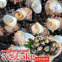 活きたまま発送 サザエ 5kg(40〜65個) さざえ つぼ焼き 送料無料 中サイズ BBQ用 海鮮 魚介 バーベキュー 同梱不可 冷蔵配送 水産 父の日