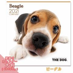 2021年 THE DOG カレンダー【大判】 ビーグル ■ 壁掛けカレンダー 写真 ポスター ザドッグ  月特
