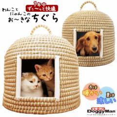 犬猫用ハウス ドギーマン わんことにゃんこのお〜きなちぐら なかよしタイプ ■ 自然素材 カイザ草 ハンドメイド キャティーマン
