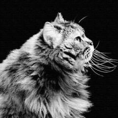 猫 アートパネル ANIMAL Mサイズ 30cm×30cm lib-4122834s1  /NP 後払い/北欧/インテリア/セール/モダン/送料無料/激安/アートパネル/イ