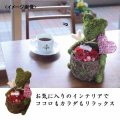 花 置き物プリザアレンジモスベア(赤)ハートピック付(プリザーブドフラワー)生活雑貨 インテリア