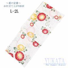 仕立て浴衣 女性用 -143- 綿100% L/LL 白/菊柄