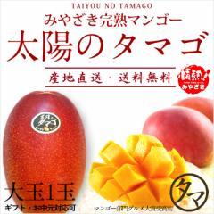 【送料無料】太陽のタマゴ 大玉1玉 最高級 フルーツ マンゴー 宮崎 果物 香り 糖度 プレミアム ギフト プレゼント 父の日 送料無料 のし