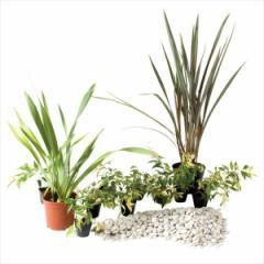 オンリーワン 目的で選ぶ 植栽セット イージー ニューサイラン お手入れ簡単 UN6-SET03