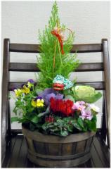 年越し特集 お正月鉢植えハボタンのミニガーデン門松風 お正月 鉢植え 葉牡丹 お歳暮 年越し