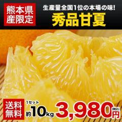 秀品 甘夏 みかん 10kg 送料無料 3L-Mサイズ 熊本県産 柑橘 ギフト 贈答 フルーツ 果物 あまなつ 7-14営業日以内に出荷予定 土日祝日除く
