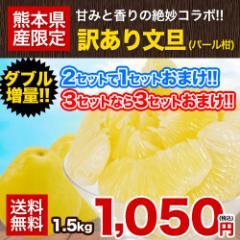 文旦 パール柑 1.5kg 訳あり 送料無料 熊本県産 2セット購入で1セット 複数購入は1箱におまとめ セレブ柑 2月末-3月中旬頃より順次出荷