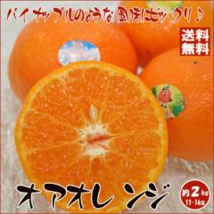 【送料無料】オアオレンジ 約2kg (11-16玉) イスラエル産 パイナップルの風味がする不思議フルーツ 地中海原産トロピカルな味[大阪常温]