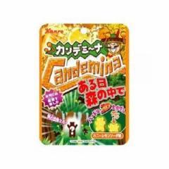 カンロ カンデミーナグミ 森の中でハニーレモン 40g×6入(12月上旬頃入荷予定)