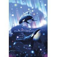 ビバリー  星の輝く海 43904