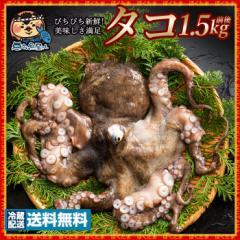 タコ たこ (生) 1匹 約1.5kg 天然タコ 冷蔵 [送料無料 蛸 天然 神経抜き 魚介 ] グルメ 【海産物】