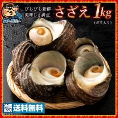 サザエ さざえ (殻入り)  天然 1kg (4〜5個) 冷蔵 [送料無料 天然 海鮮 貝 バーベキュー BBQ 壺焼き 貝類 ] グルメ 【海産物】