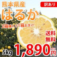 はるか みかん 訳あり 送料無料 5kg S〜2L 熊本県産 2箱購入で1箱おまけ 平成生まれの新品種 はるかみかん 上品な甘みと香り 蜜柑