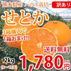 せとか みかん 訳あり 送料無料 2kg 8〜13玉 ハウス栽培 希少品種 3箱購入で1箱おまけ 熊本県産 せとかみかん 蜜柑 オレンジ