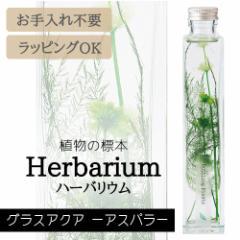 ハーバリウム BP-17101 グラスアクア 1.アスパラ インテリア 観葉植物