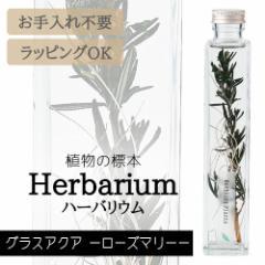ハーバリウム BP-17101 グラスアクア 4.ローズマリー インテリア 観葉植物