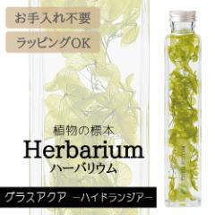 ハーバリウム BP-17101 グラスアクア 5.ハイドランジア インテリア お祝い 母の日 プレゼント ギフト 観葉植物 植物標本