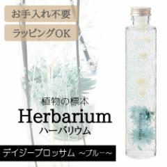ハーバリウム BP-17102 デイジーブロッサム 6.ブルー インテリア 観葉植物