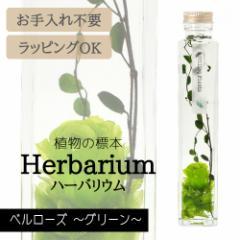 ハーバリウム BP-17105 ベルローズ 5.グリーン インテリア 観葉植物