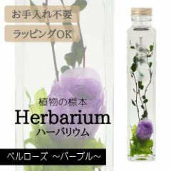 ハーバリウム BP-17105 ベルローズ 7.パープル インテリア 観葉植物