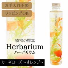 松村工芸 ハーバリウム BP-18104 カーネローズ 4.オレンジ 母の日 プレゼント ギフト 誕生日 女性 フラワー 観葉植物 植物標本
