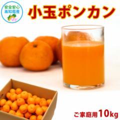 訳あり 小玉ポンカン 10kg 高知県産 産地直送 宅配便 送料無料/ご家庭用 フルーツ 果物 みかん ジュース