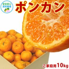 訳あり ポンカン 10kg 高知県産 産地直送 宅配便 送料無料/ご家庭用 フルーツ 果物 みかん