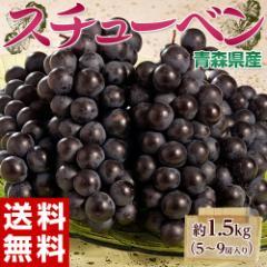 ブドウ ぶどう 葡萄 送料無料 青森県産 スチューベン 5〜9房 約1.5キロ