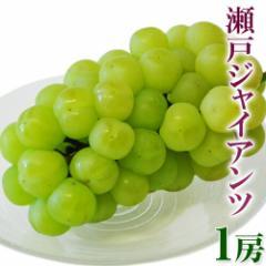 ブドウ ぶどう 送料無料 岡山産 「瀬戸ジャイアンツ」大房1房 約600g 冷蔵