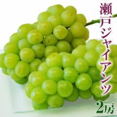 ブドウ ぶどう 送料無料 岡山産 「瀬戸ジャイアンツ」大房2房(約600g×2) 冷蔵